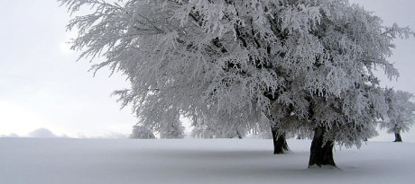 snow-covered-tree